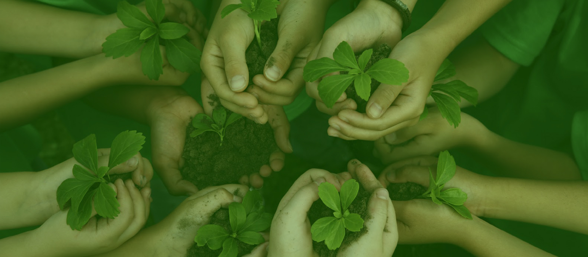 How can your business play a part in protecting the Environment?